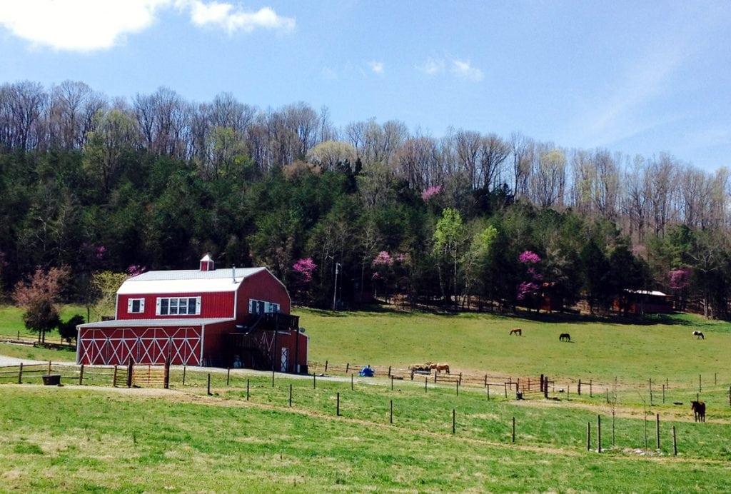tandy farm sparta tn 1